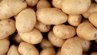 البطاطا … الفوائد الصحية العجيبة التي تملكها البطاطا